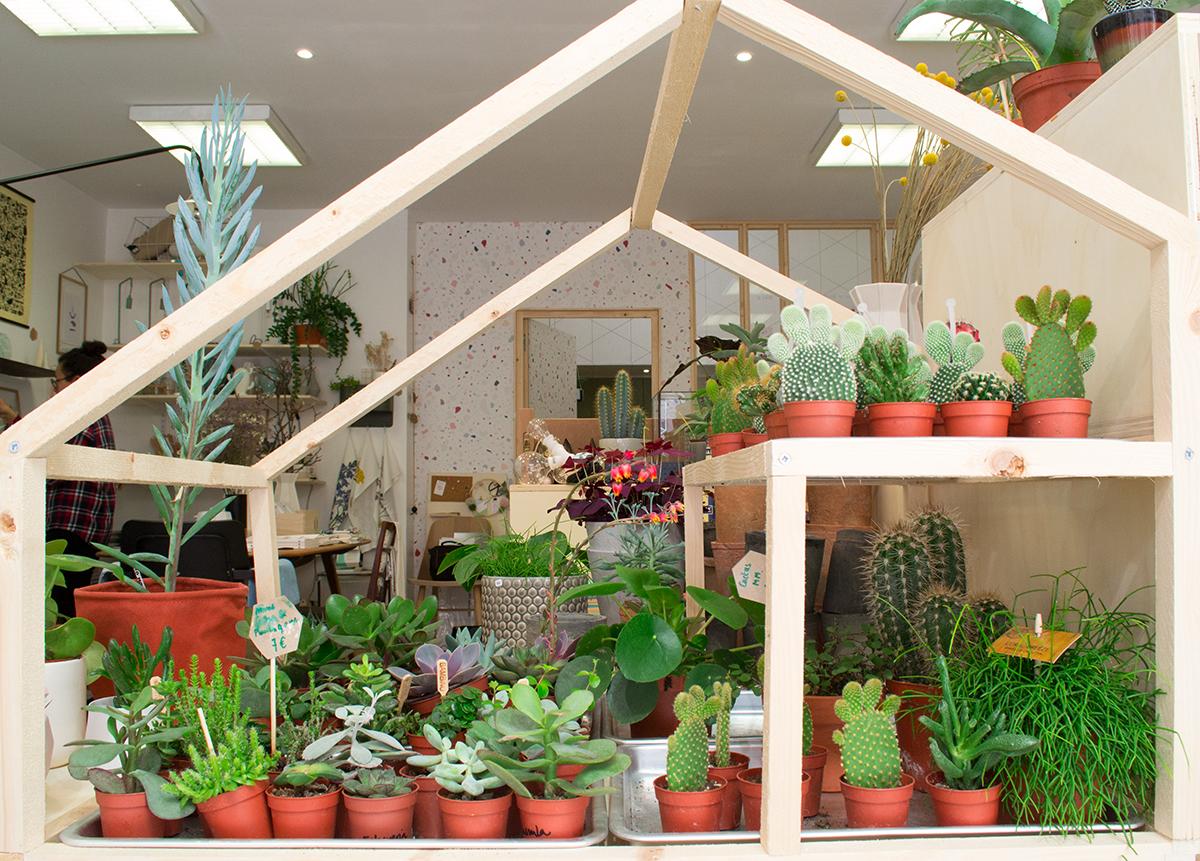 Atelier Kumo - la maison des cactus