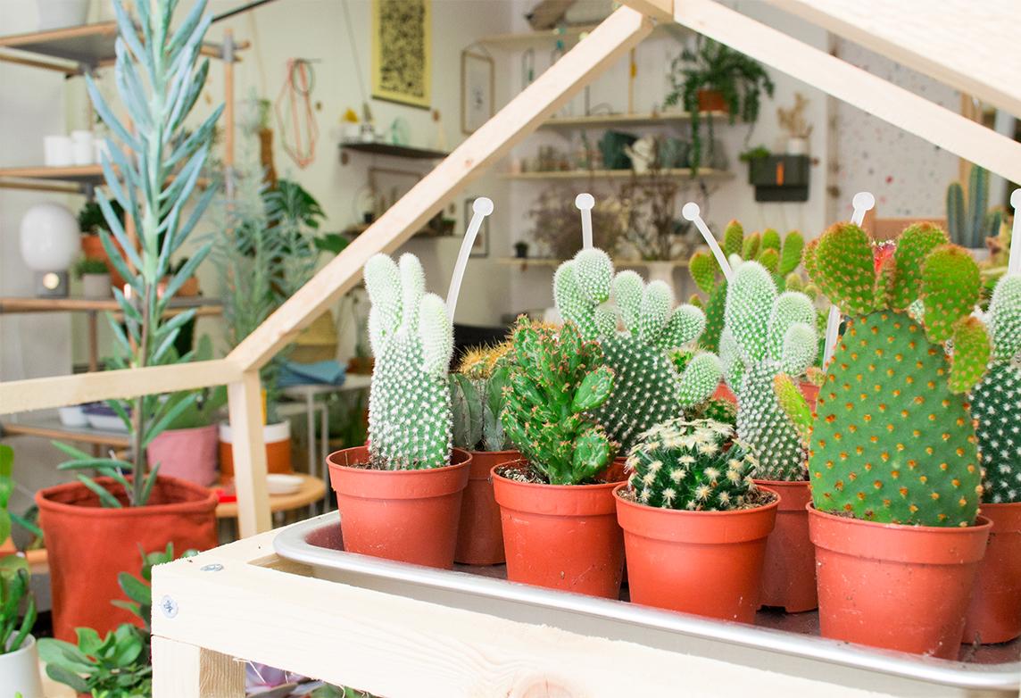 Atelier Kumo - cactus